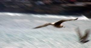 Vuelo de una gaviota solitaria