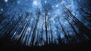 cielo-estrellado-en-el-bosque