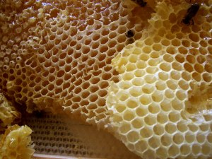 Honey_comb (1)