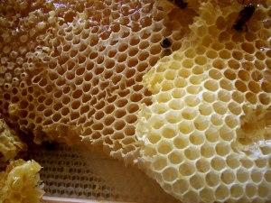 Honey_comb (1)