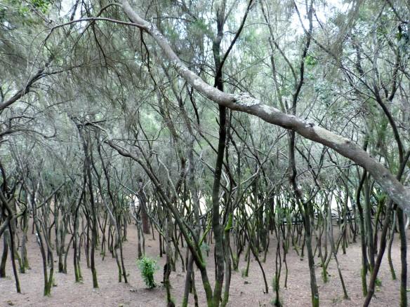 bosque encantado.jpg
