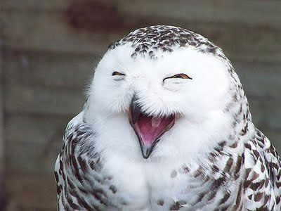 cool-smiling-owl
