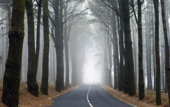 el camino sigue mas alla de la luz.jpg