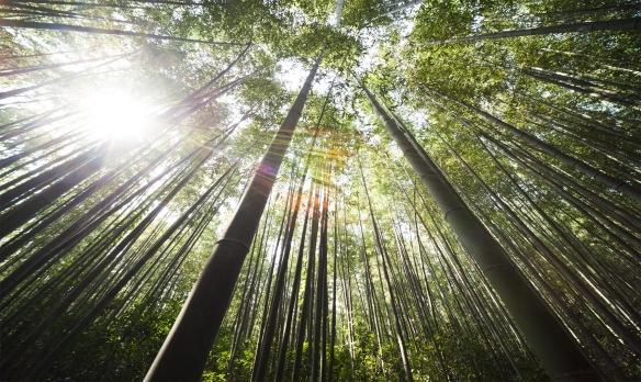 bamboo-364112