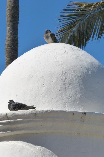 dos palomas, una palmera y una cúpula.JPG