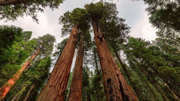 sequoia07-1280x720x80xX.jpg