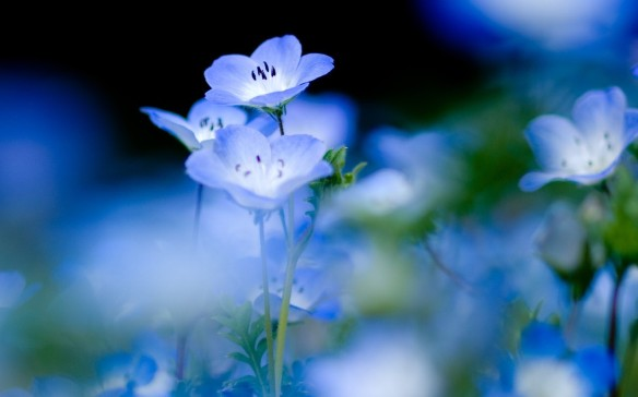 Blue-Flower-Images.jpg